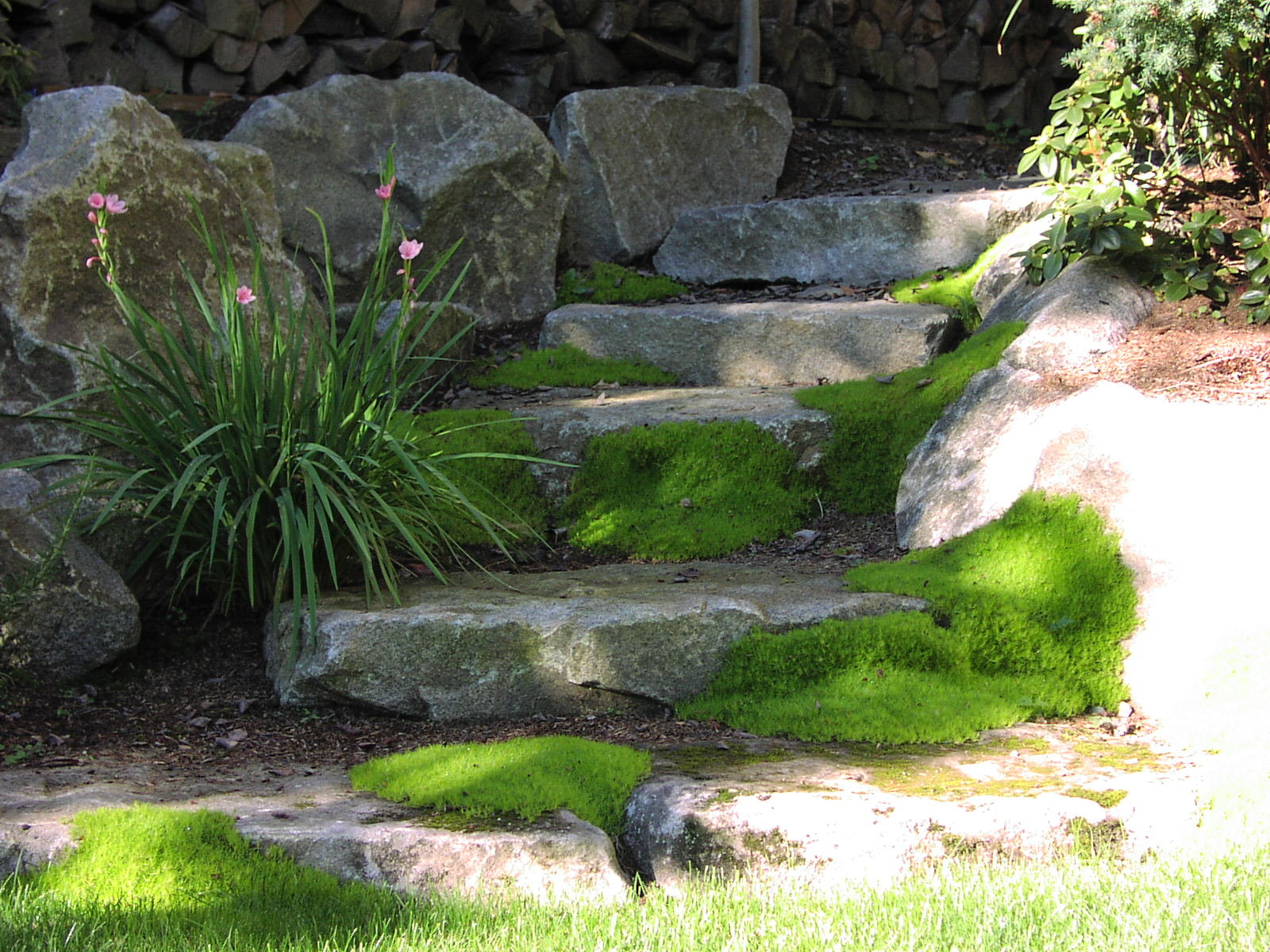 Stone steps landscaped with moss by Environmental Construction Inc. in Kirkland WA